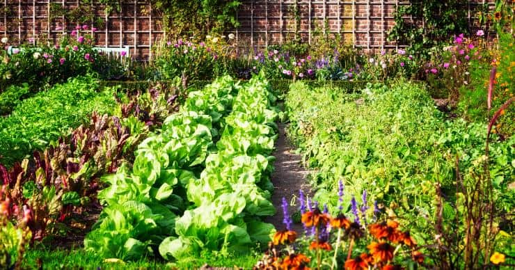 garden with rows of plants