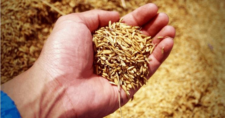 handful of rice